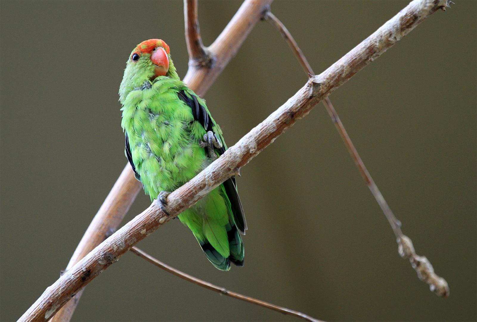 Papageien im Tierpark Schönbrunn