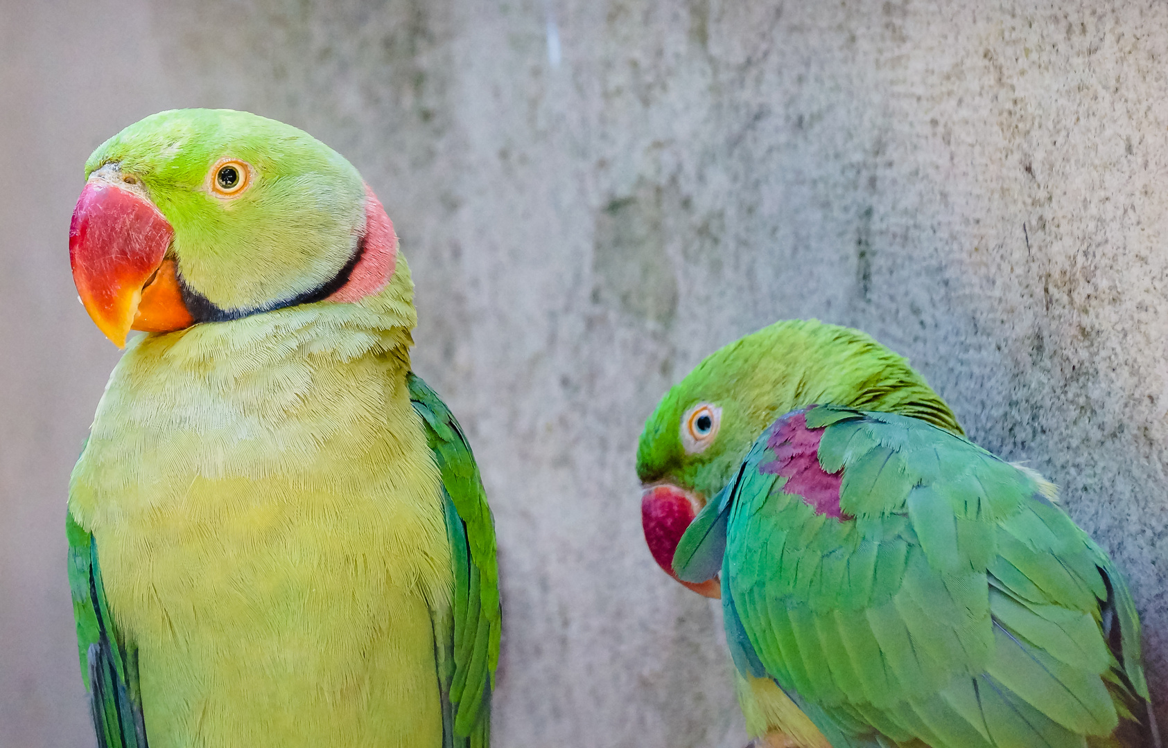 Papageien im Zoo von Dehiwala