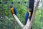 Papageien - Luiesenpark 3