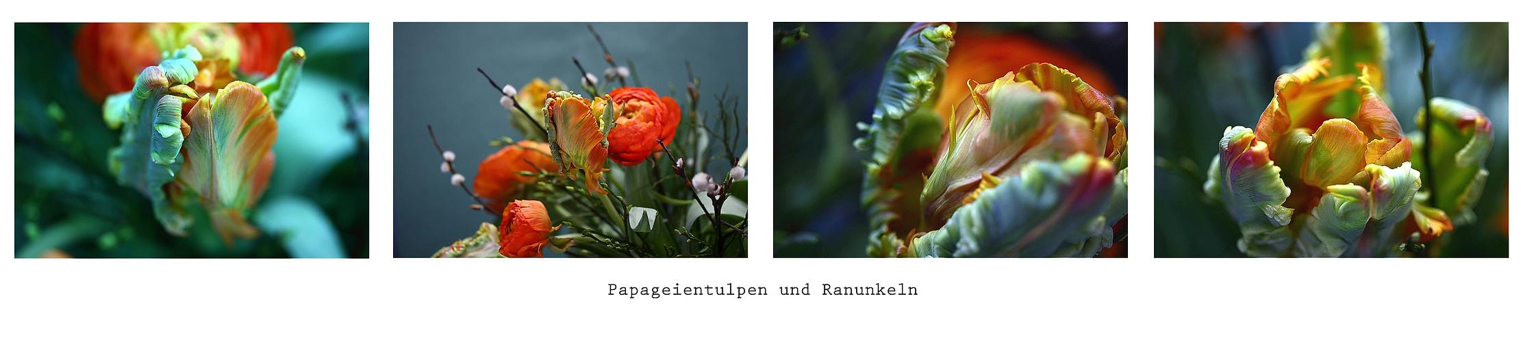 Papageientulpen und Ranunkeln