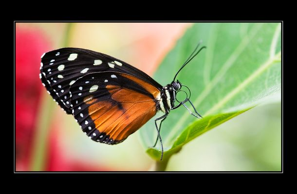 Papiliorama 9