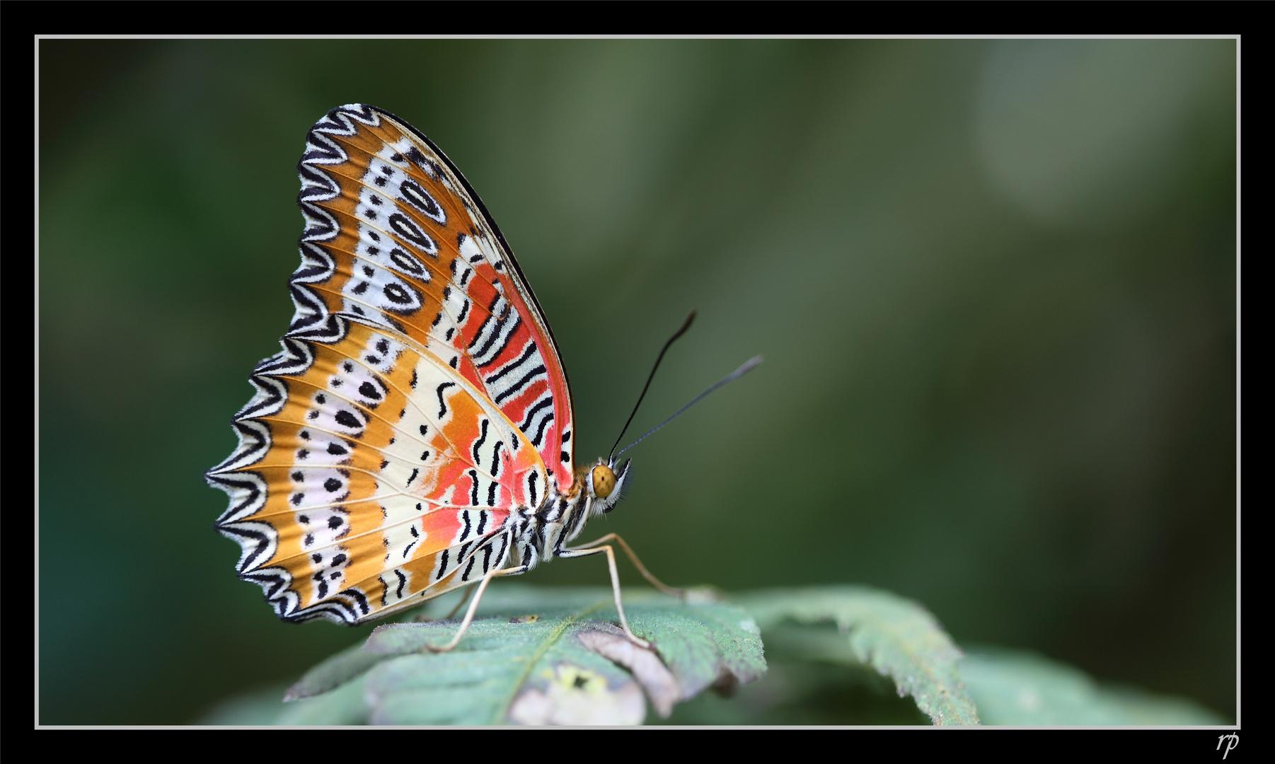 Papiliorama de Kerzers 1