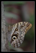 Papiliorama de Kerzers 2