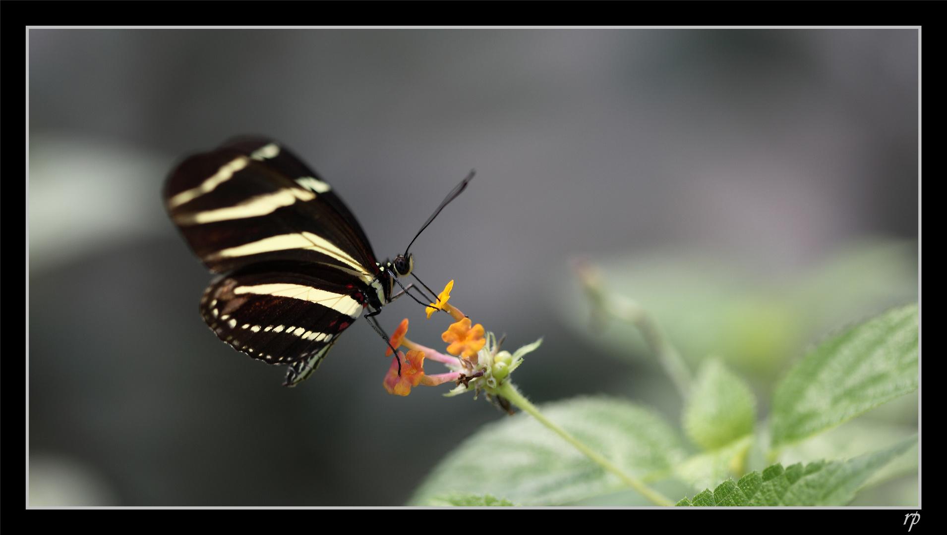 Papiliorama de Kerzers 3