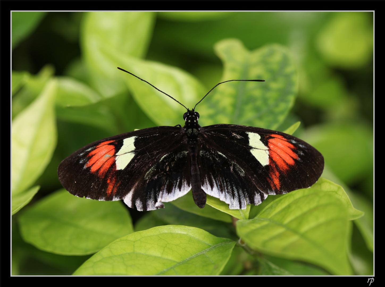 Papiliorama de Kerzers 8
