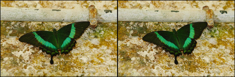 Papiliorama in Icod / Teneriffa.