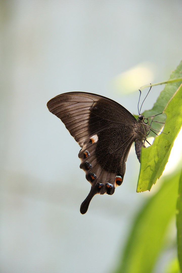 Papiliorama Kerzers