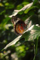 Papiliorama Schweiz