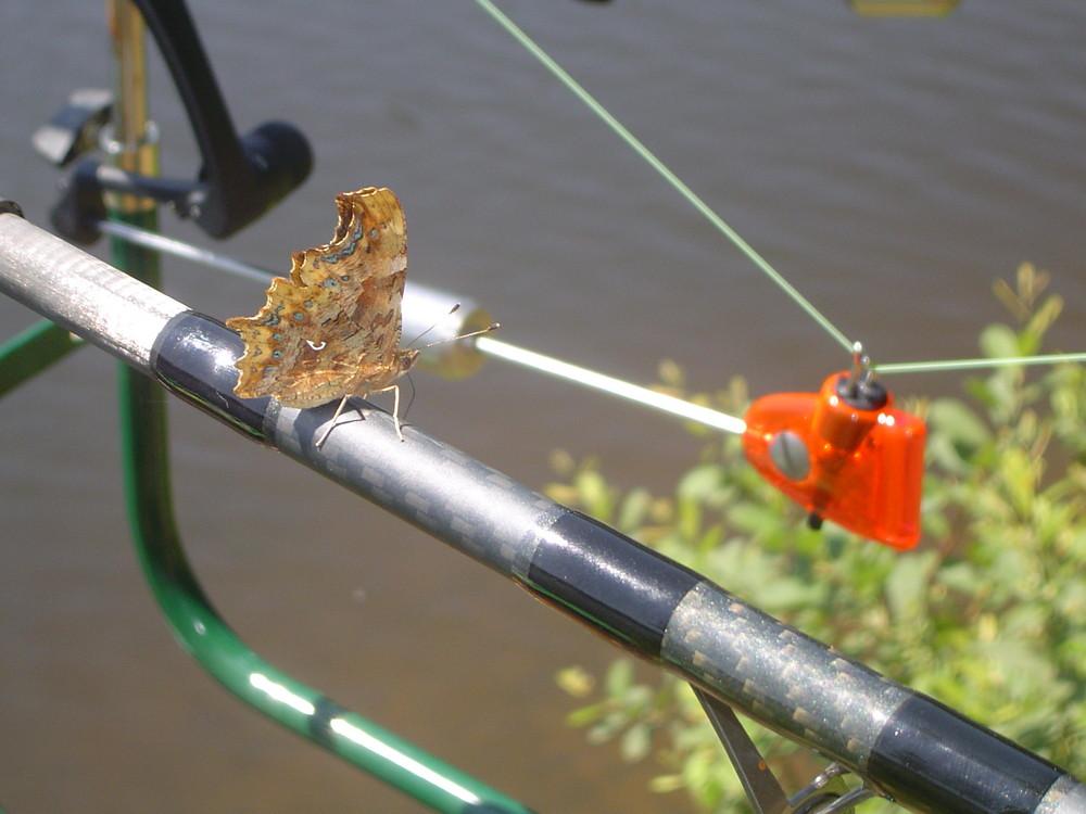 papillon a la peche
