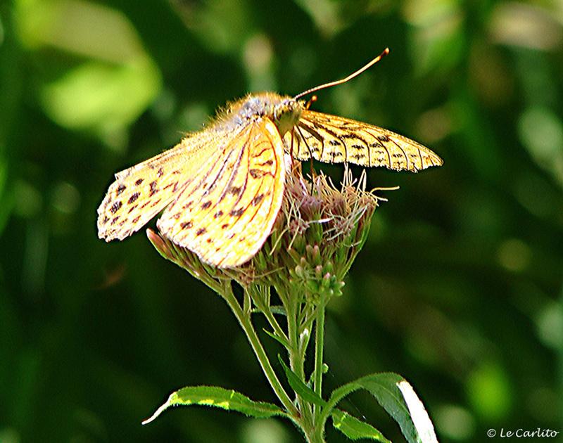 Papillon au printemps