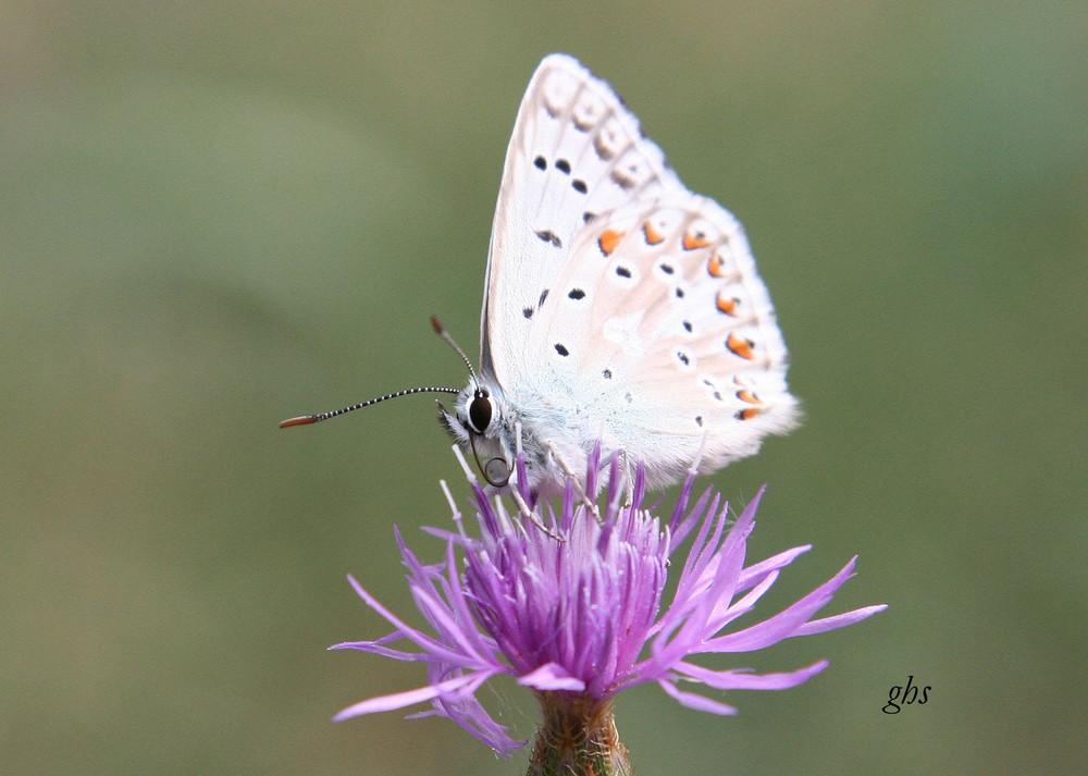 papillon bapteme 2