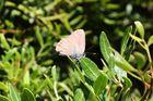 papillon de lumiere
