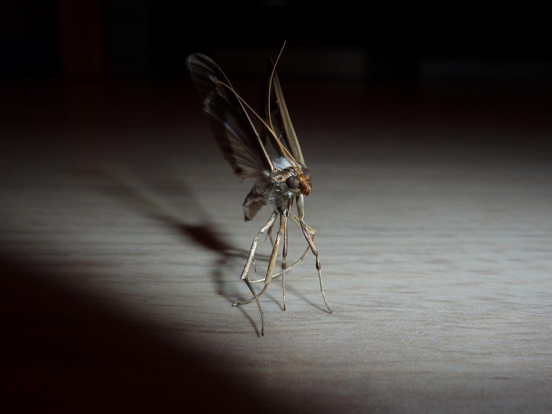 Papillon de nuit photo et image macro nature macro insectes papillons images fotocommunity - Duree de vie papillon de nuit ...