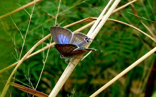 Papillon du jour, bonjour