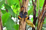 Papillon feuille ouvert