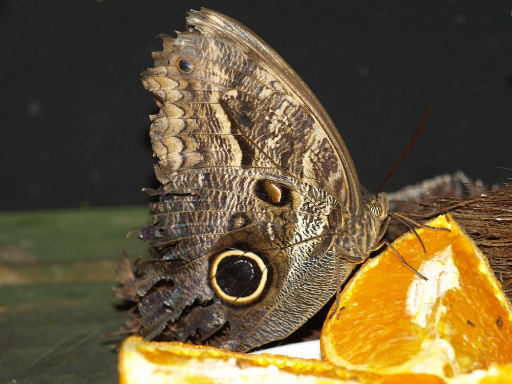 Papillon. Jardins du monde. Royan
