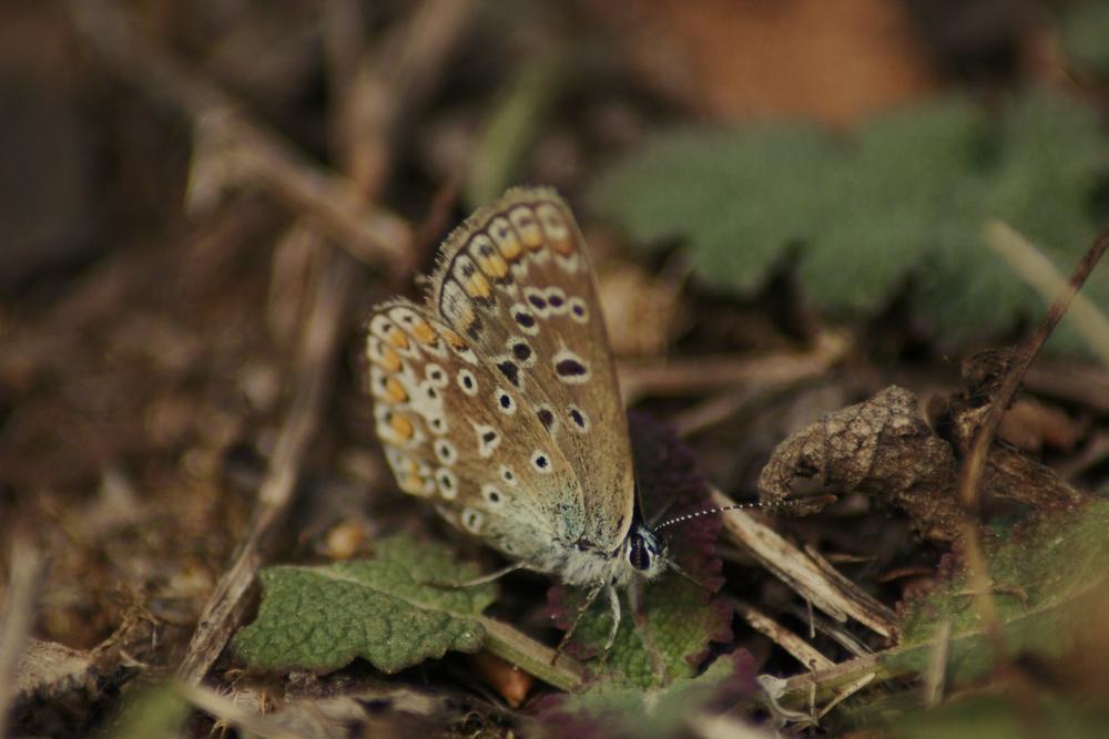 papillon photographié à l'île de ré