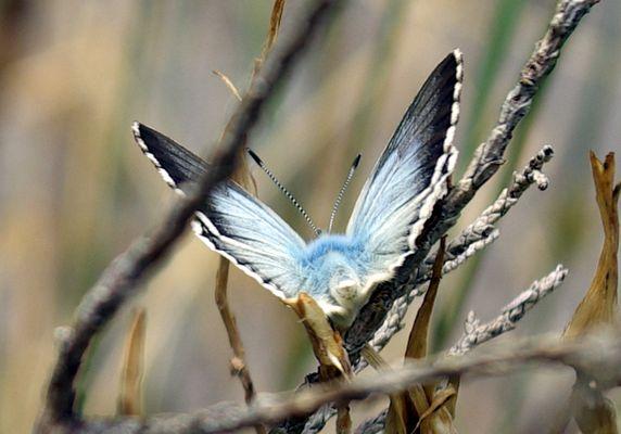 papillon sur le chemin de la mature