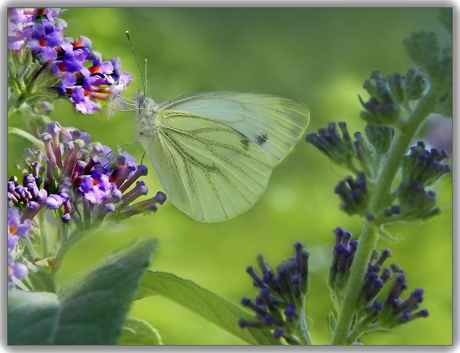 Papillon sur son arbre préféré .