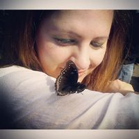 papillon.noir