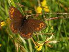 papillons parade 1