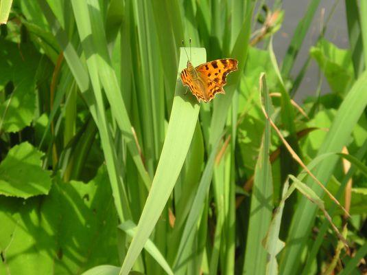 Papillons sur tige