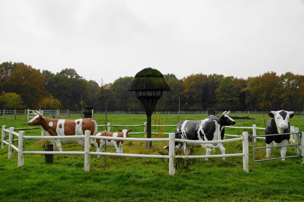 Pappkühe auf der Weide
