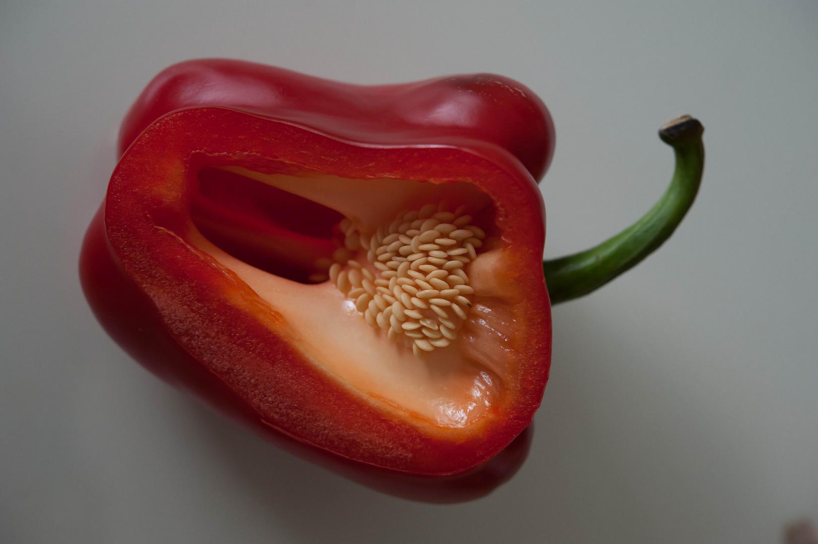 paprika #12