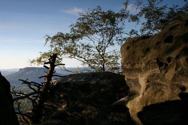 Papststein - Aus einer Felsspalte