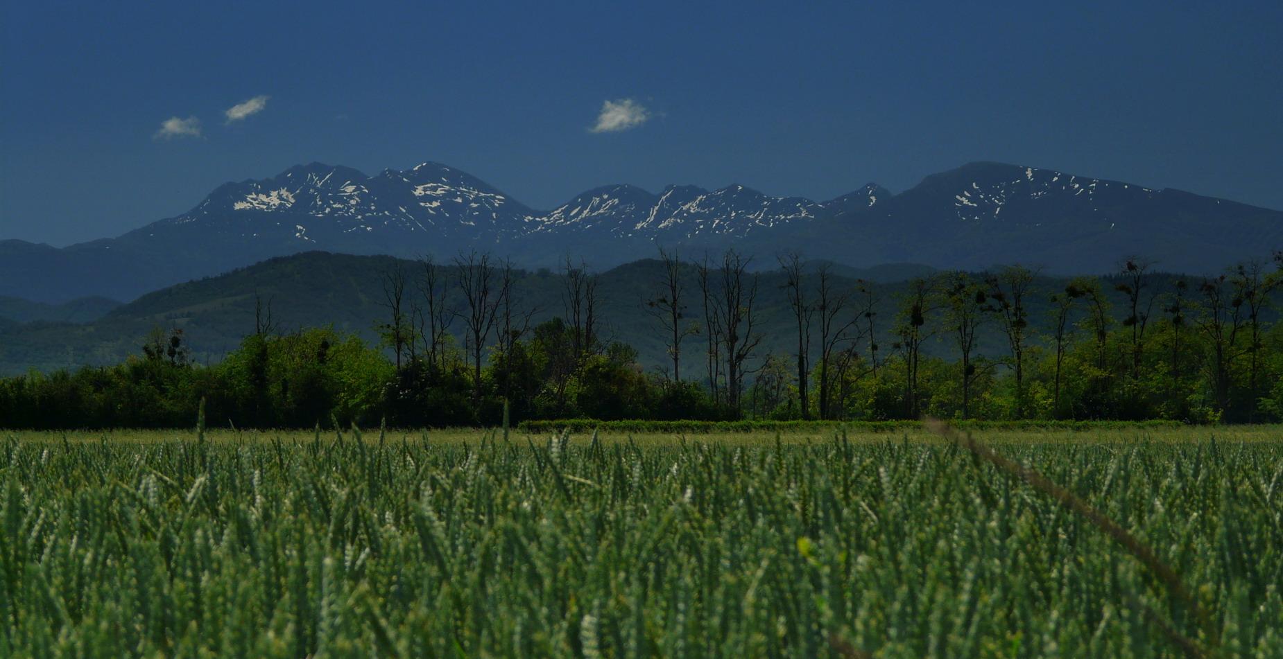 Par-dessus les champs de blé