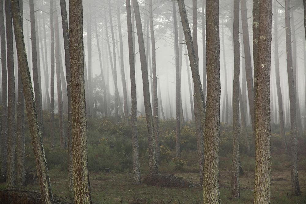 par temps de brouillard !!!