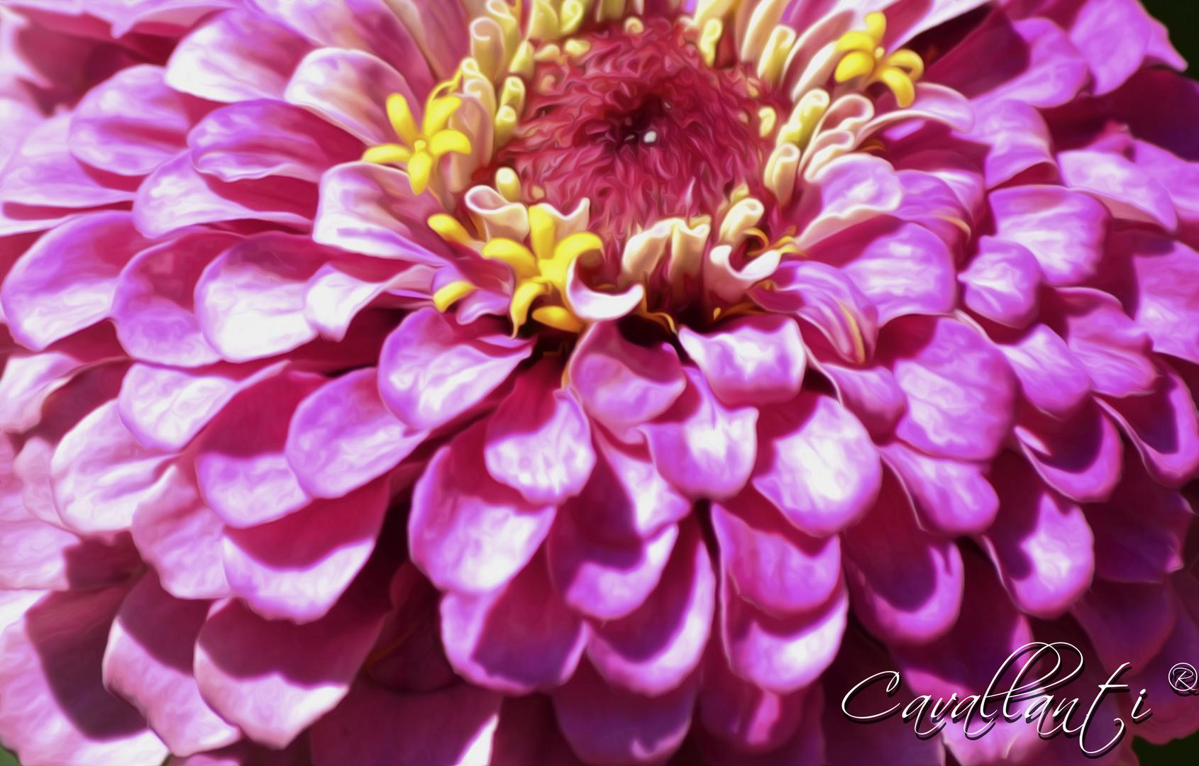 Para una bella Dama la mas linda flor...