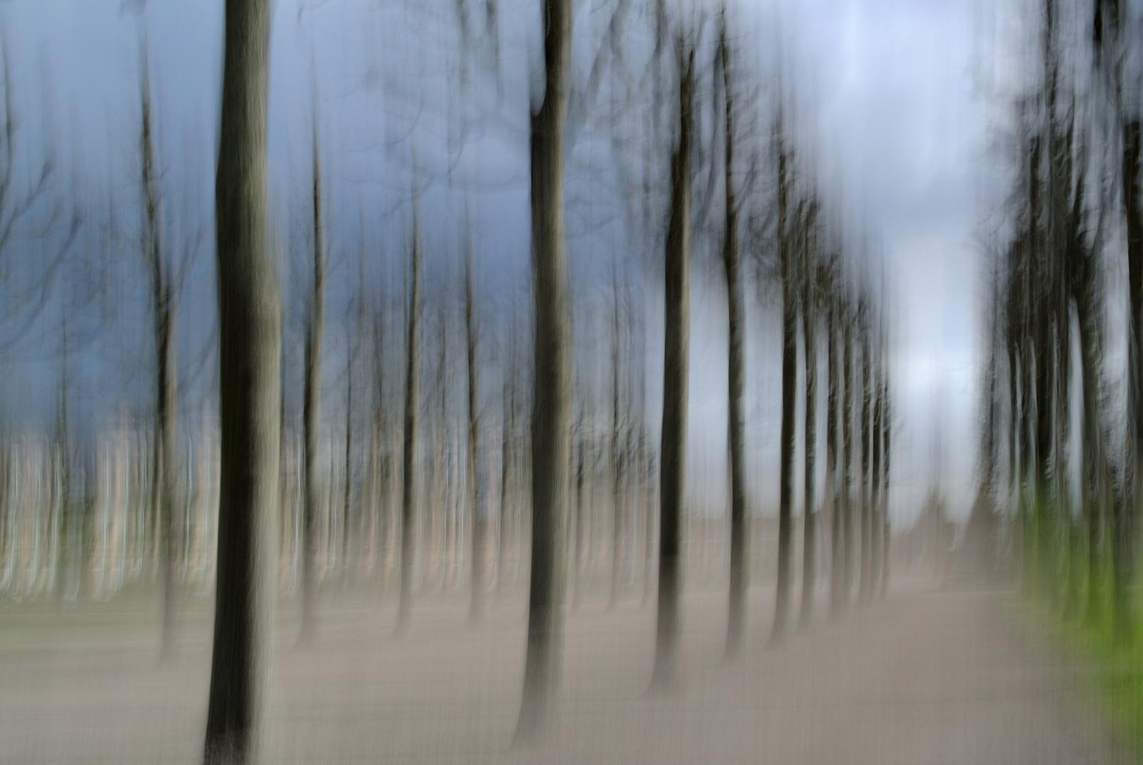 Parade der Bäume