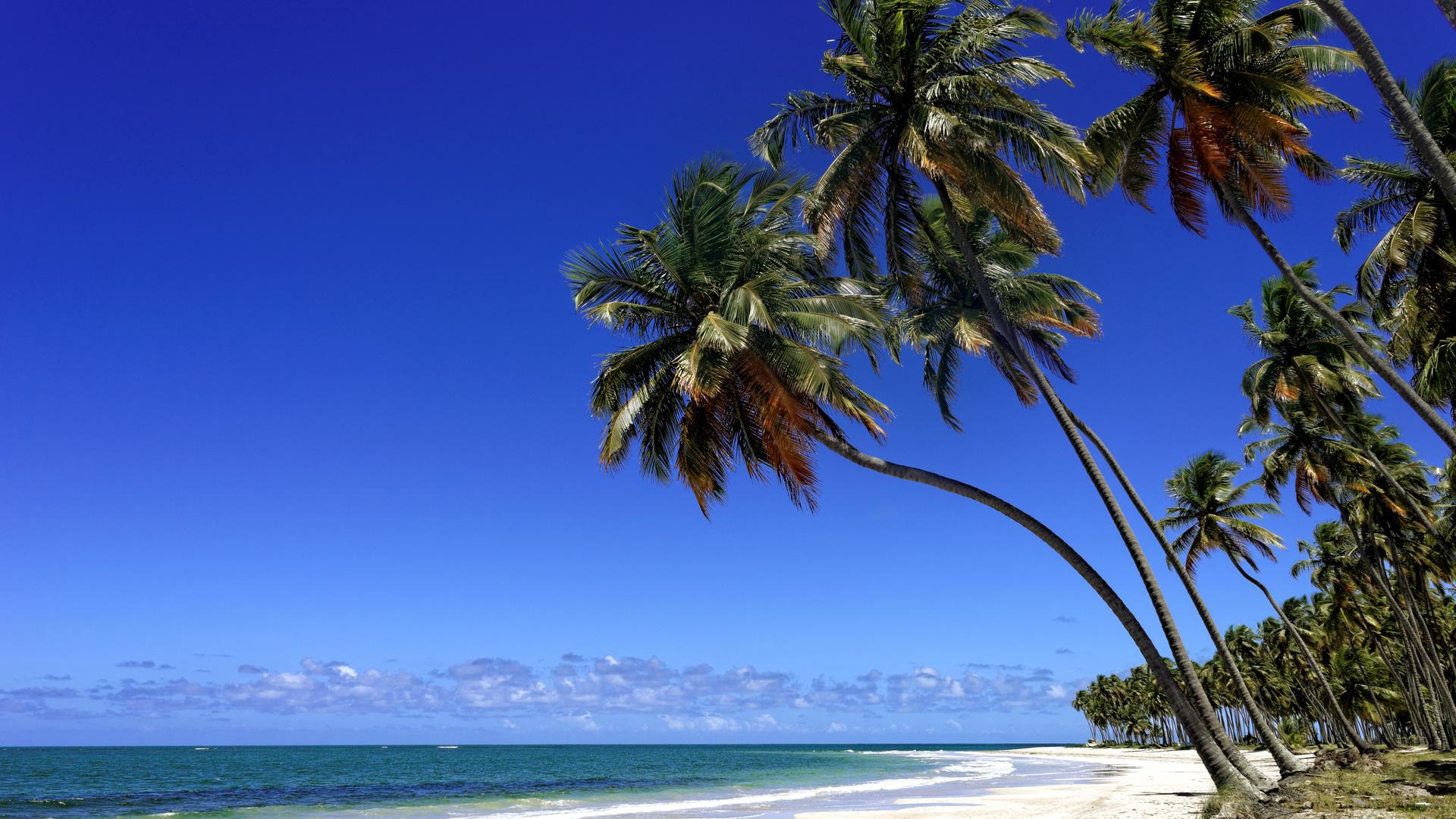 Paradies - Praia dos carneiros - Brasil
