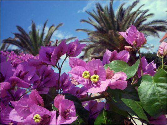 Paradiesische Blüten..