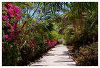 Paradiesischer Weg