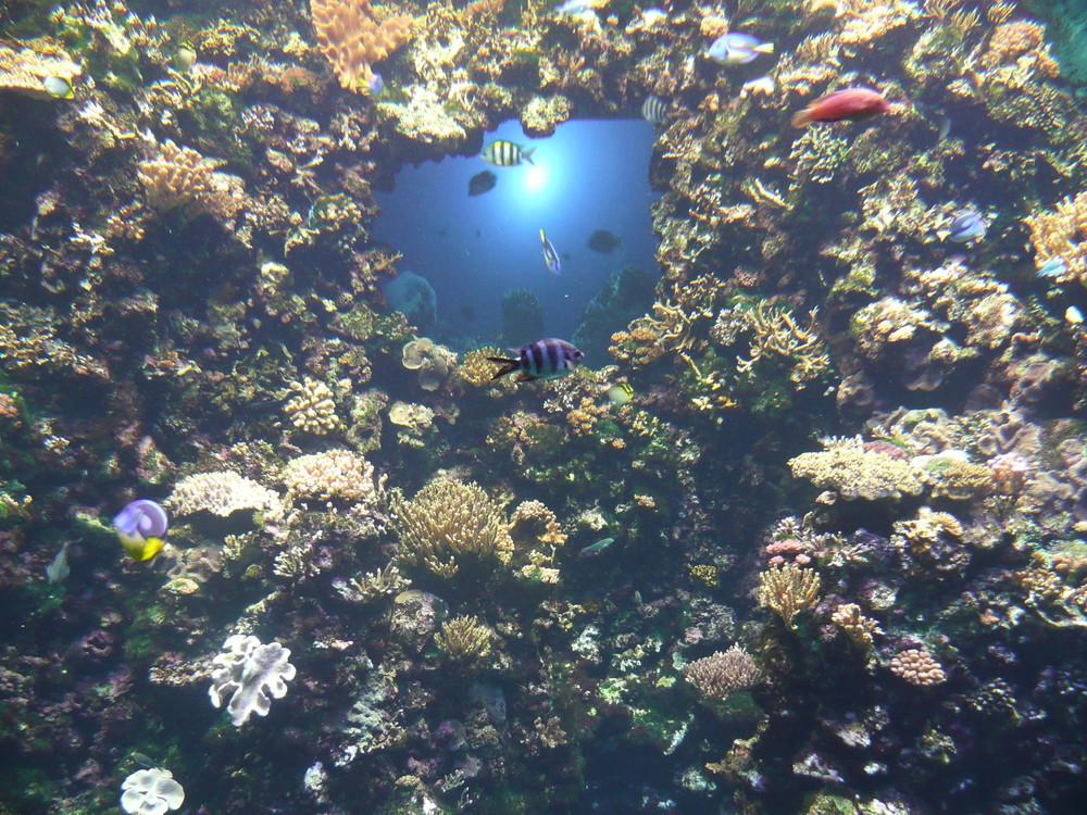 Paradis aquatique