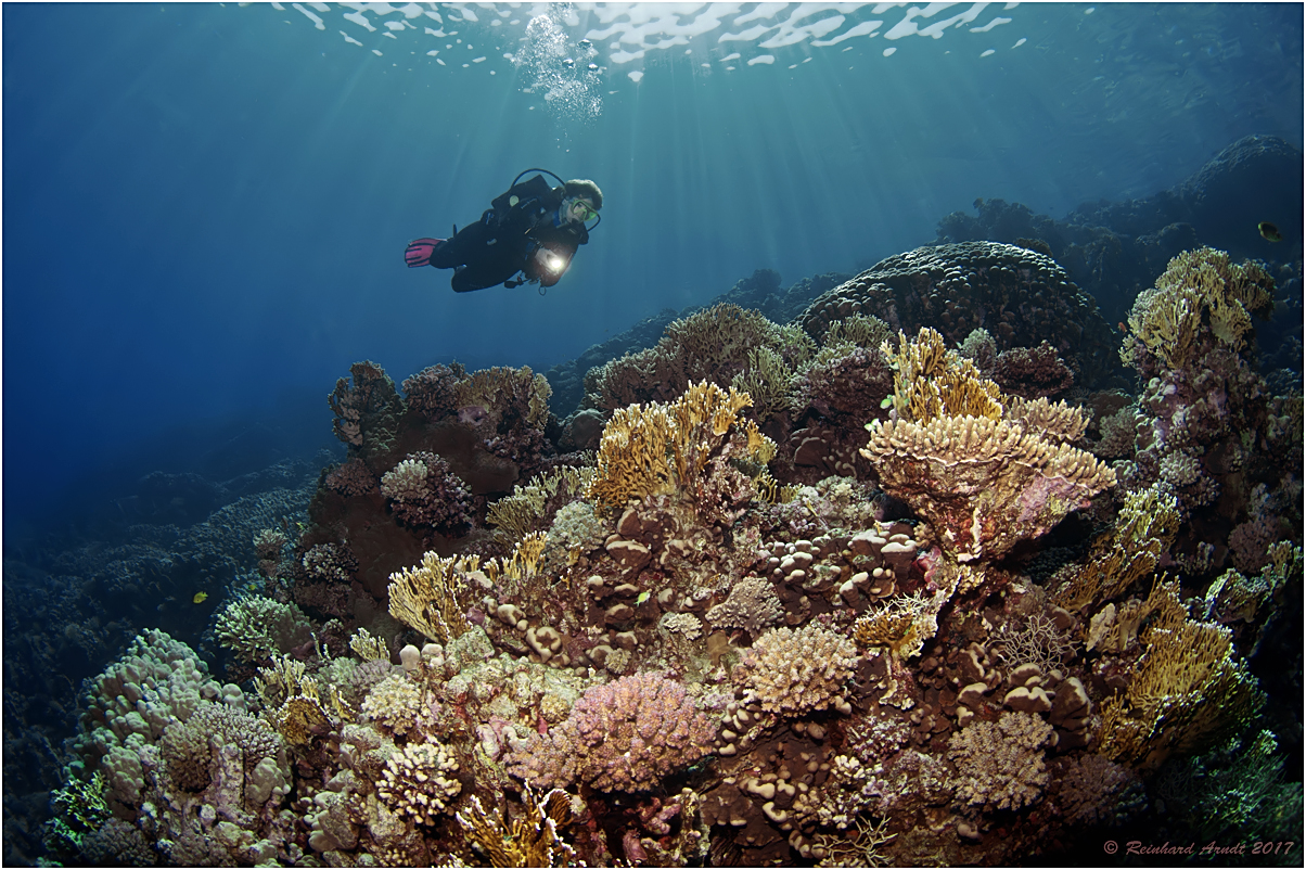 Paradise Red Sea