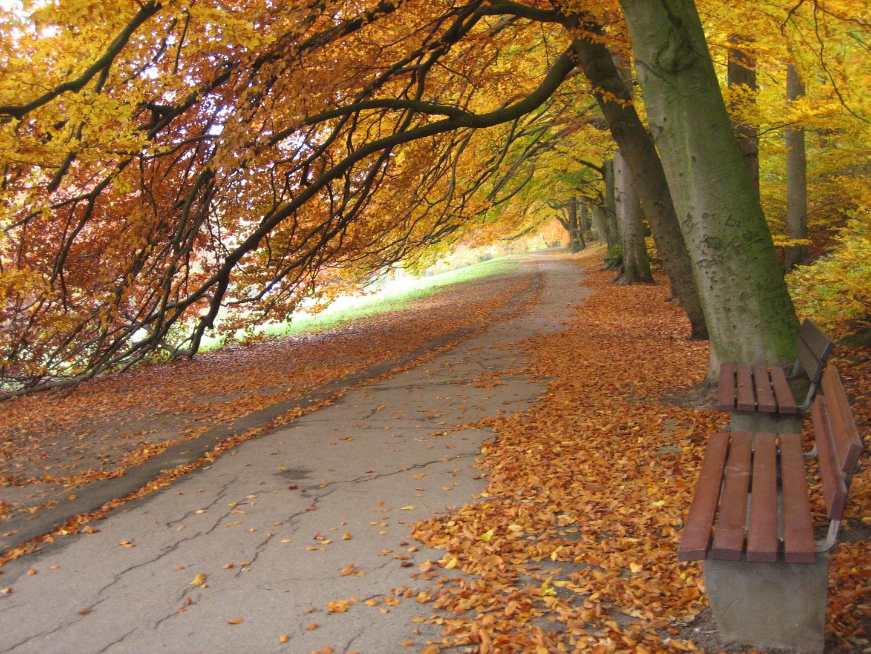 Parallelweg zur Promenade in Bielefeld