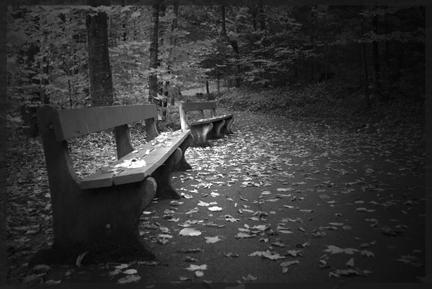 Parc abandonné