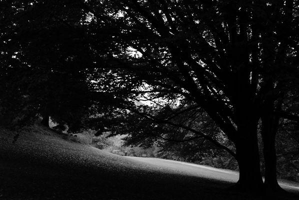 Parc Astrid / ombre & lumière