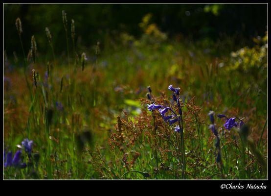 Parc Marguerite Yourcenar, mont noir