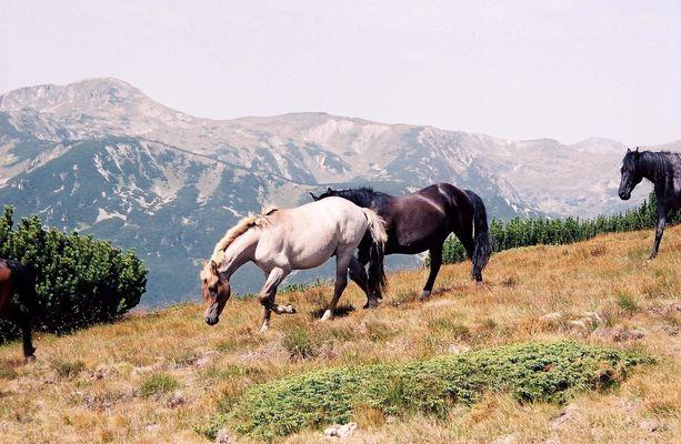 Parc national du Pirin en Bulgarie