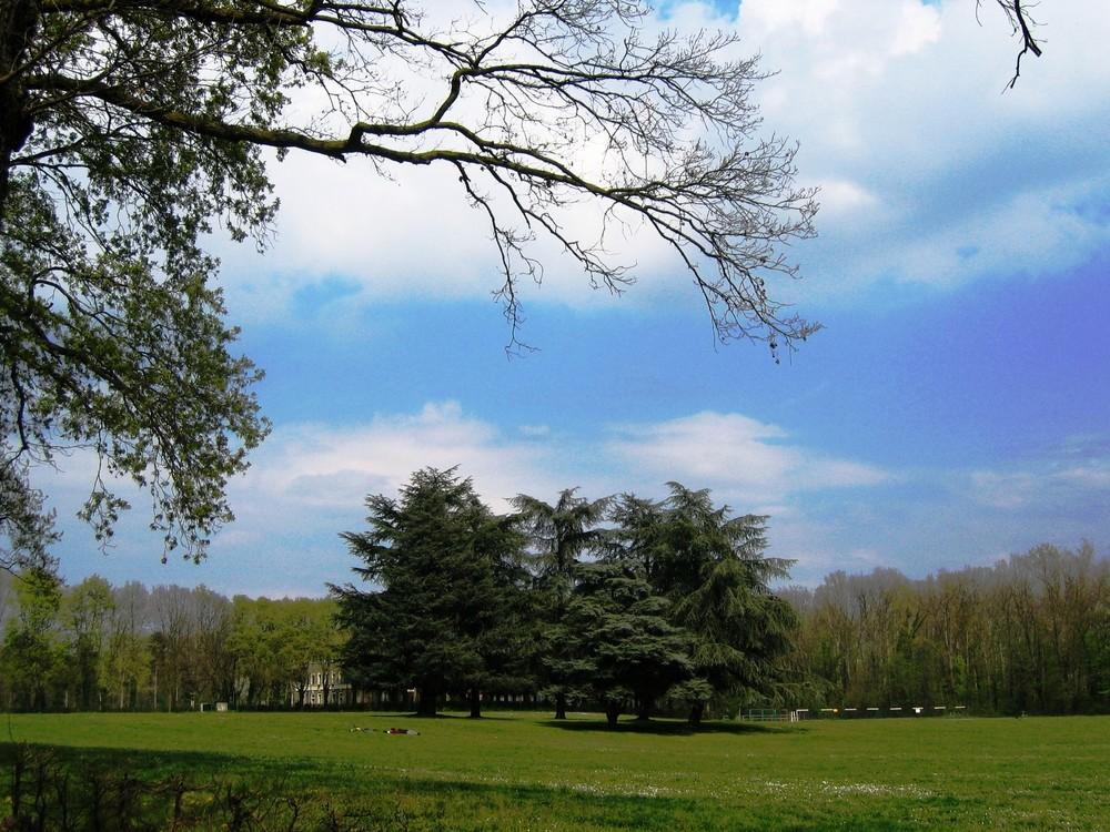 Parco di Monza - ::: Pisolino al sole :::