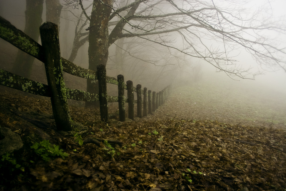 Parco nazionale foreste casentinesi 3