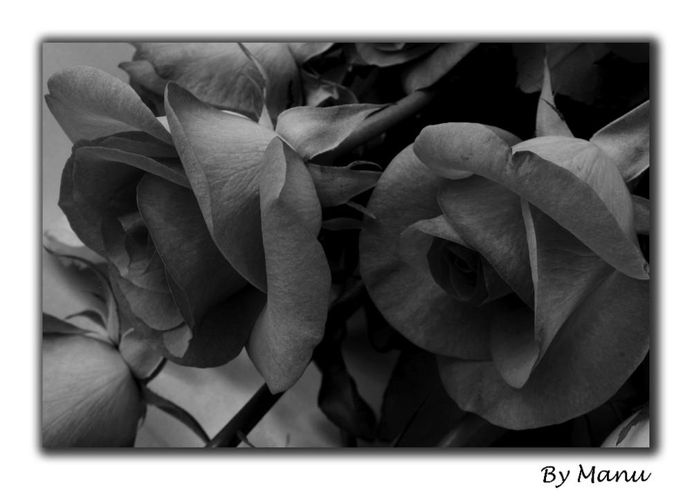 Pareja de rosas