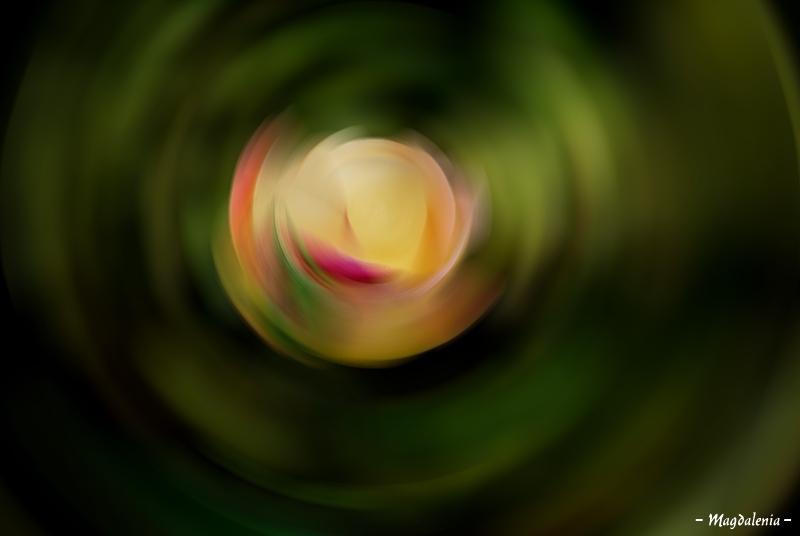 Parfum de rose jusqu'à l'ivresse