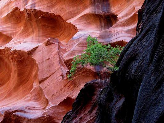 Paria Canyon - Felswand
