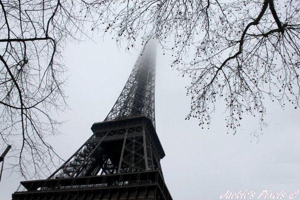 Paris bourgeonne !