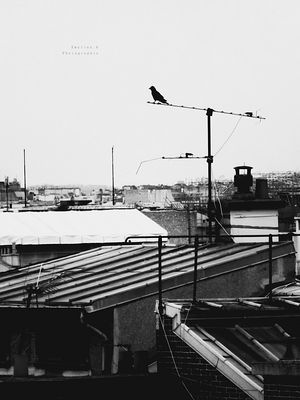 Paris et ses toits gris